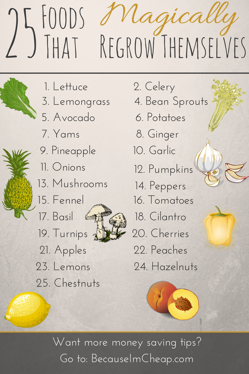 25 Foods That Magically Regrow Themselves | Save money by regrowing from kitchen scraps #BecauseImCheap
